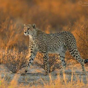In the bush - Photo © Morkel Erasmus Photography