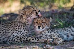 Kgalagadi Transfrontier Park, South Africa