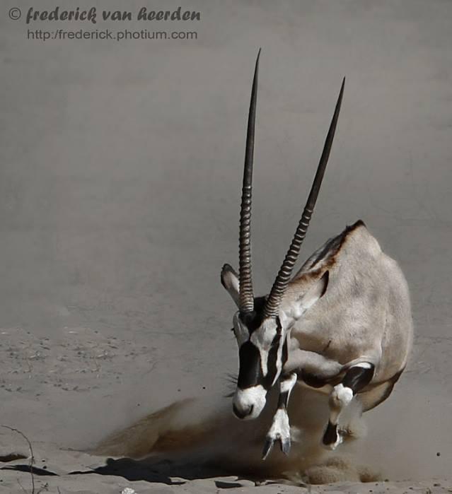Kicking up dust - by Frederick van Heerden