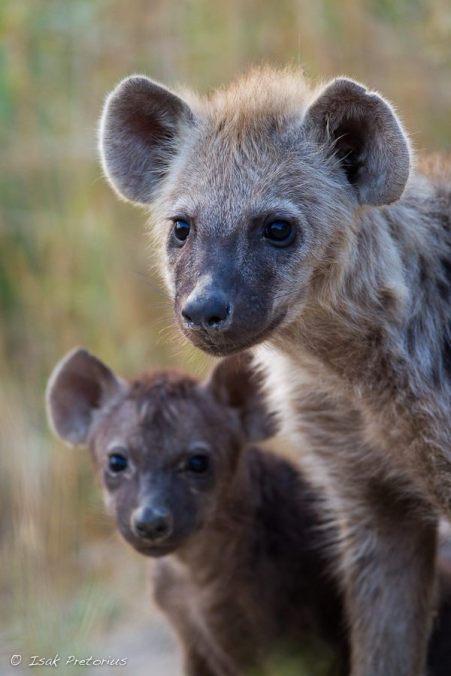 Kids at the den Chiefs Camp - Isak Pretorious Wildlife Photography