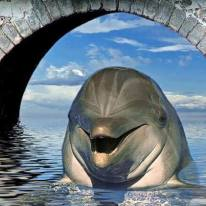 Laughing Dolphin
