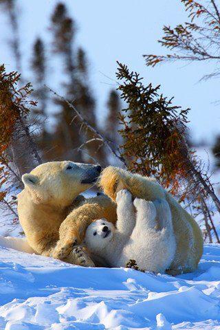 Like mother, like cub.....