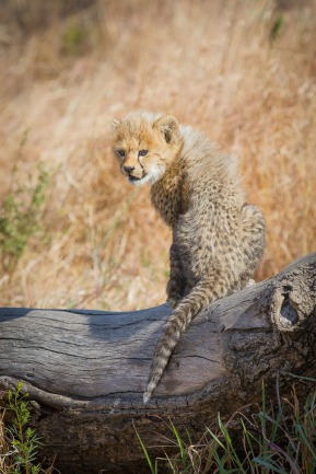 Like mother like youngster. Climbing everything they see, learning how to look after themselves. Kate Neill