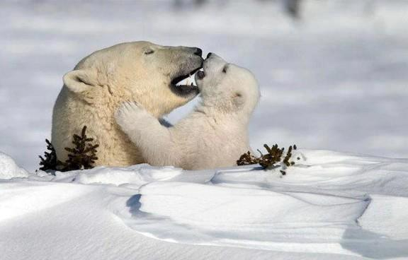 Love - (A Million Beautiful Pictures)