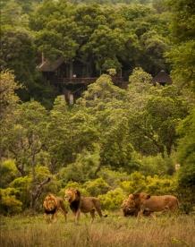 Majingilani visitors to Londolozi