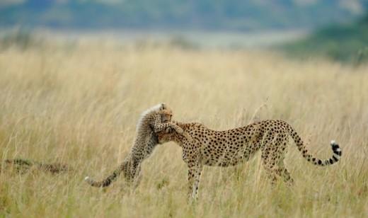 Malaika in the Mara