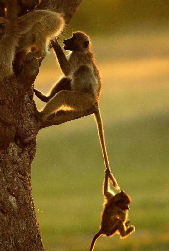 Mama swing - Michael Poliza Photographer
