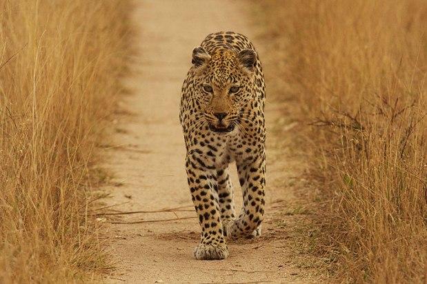 Maxabene-female-walking-down-road