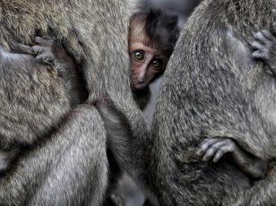 monkeys-solo-indonesia
