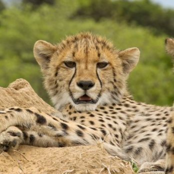 Mother on a termite mound