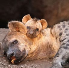 Mum and cub in the den