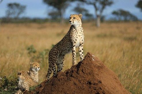 Mum and kids at Londolozi