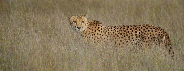 Near Satara KNP - (Chris Martin Wildlife Photography)