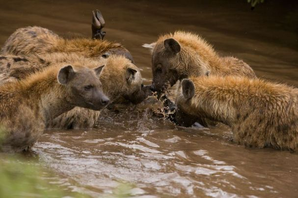 Ngorongoro Crater - Photo by Bernard BLESL