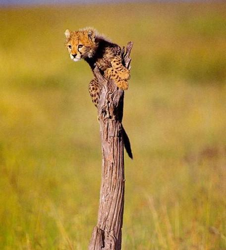 Now how do I get down ...... - Kelly Okavango