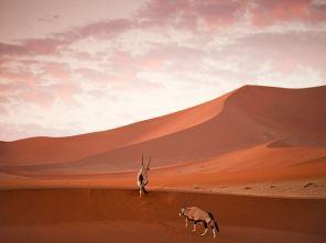 oryx-dunes-namibia_61075_990x742