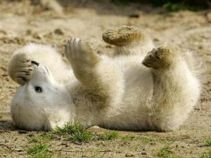 Polar Bear Cub - Andrea Monteiro Ernst