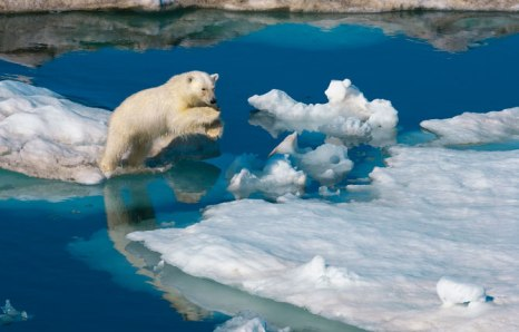Polar_bear_jumping_across_lead - Photograph by Paul Nicklen