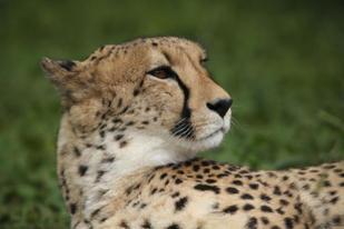 Portrait - Kelly Okavango