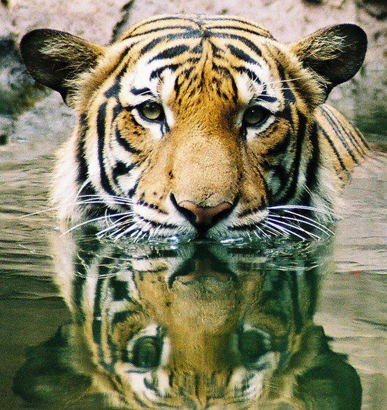 Reflections - Kelly Okavango