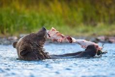 Salmon Skinning
