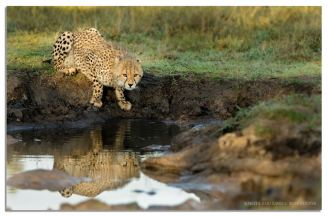 Singita - Ross Couper Photography