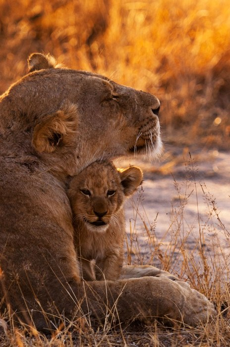 Sparta-mom-and-cub-portrait