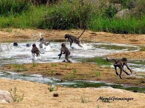 Swimming party in Kruger!!