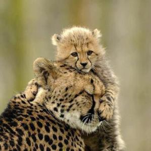 That's my Mom - Kelly Okavango