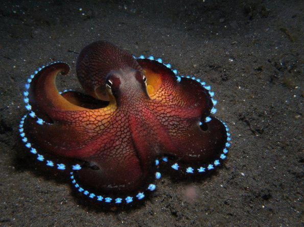 The beautiful coconut octopus comes with his own set of LED lights
