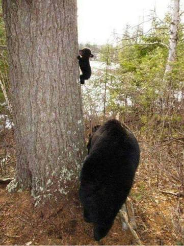 The cub's first climb.