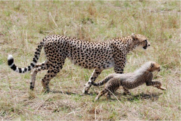 Training - Mara Serengeti