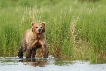 Water bear