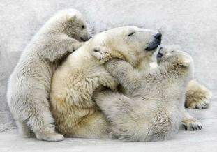 We love our Mum