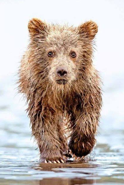 Wet bear