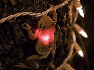 cuban-tree-frog_3627_990x742