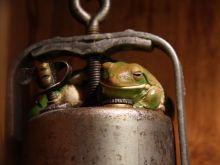 frog-metal-object_12663_990x742