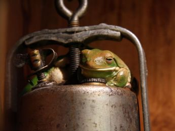 frog-metal-object_12663_990x742