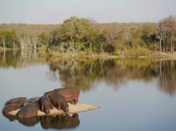Hippo Island