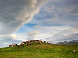 horses-farm-iceland_62979_990x742