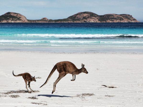 kangaroo-joey-australia_62980_990x742