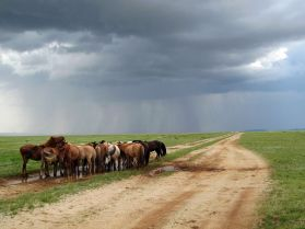 ponies-mongolian-outback_22668_990x742