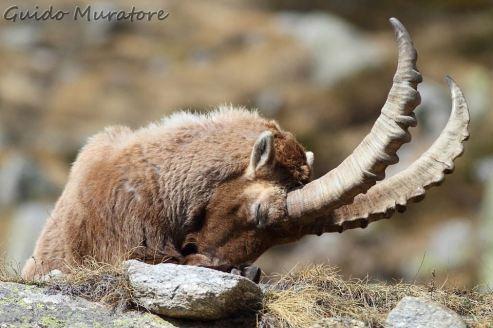 Sleeping... - Guido Muratore