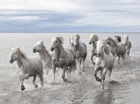 wild-horses-camargue_56403_990x742
