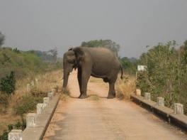 Zimbabwean roadblock