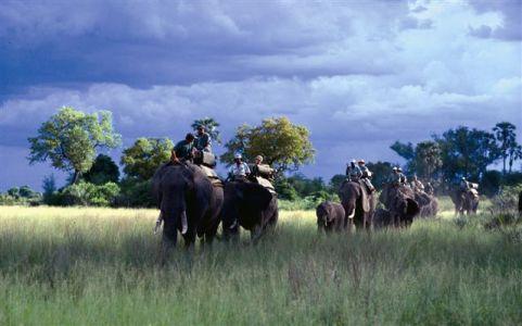 Abu_Elephants
