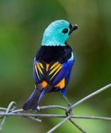 Beautiful bird - Bird story