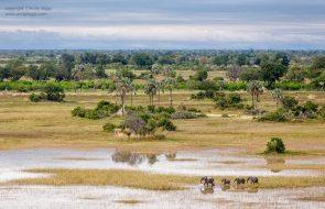 between Nxabega and Chief's Camp.