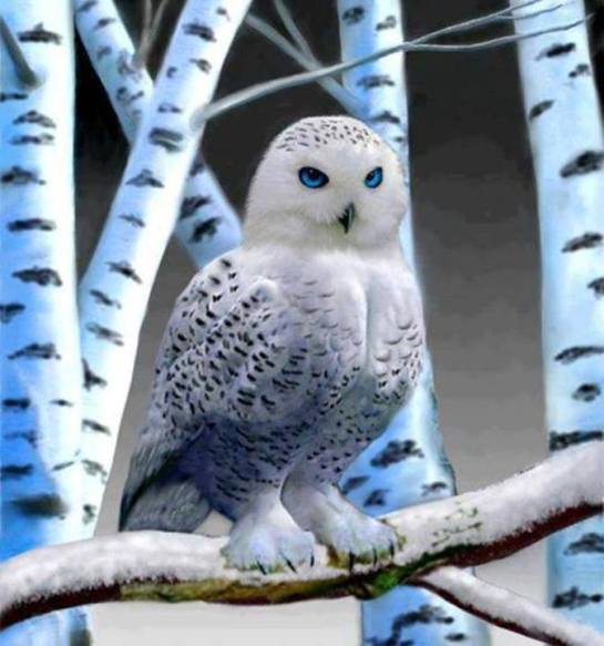 blue eyes owl