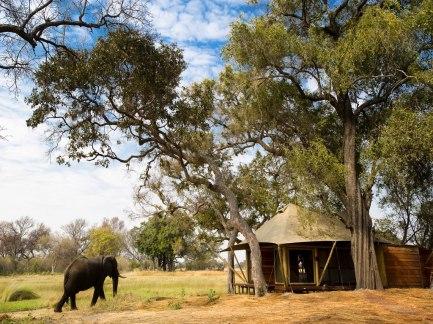 cn_image_0.size.xaranna-okavango-delta-camp-okavango-delta-botswana-110701-1